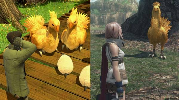 Chocobos